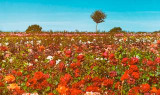 As redes sociais são um mar de rosas?